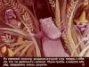 37 Муми-тролль в джунглях