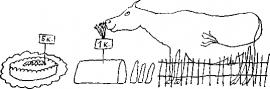 18 Синкен Хопп. Юн и Софус. Иллюстрации
