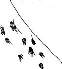 22 Синкен Хопп. Юн и Софус. Иллюстрации